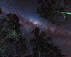 Tall Tree Milky Way